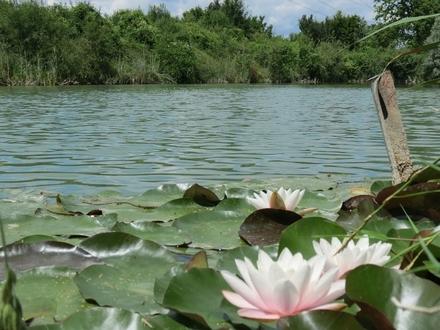 Freizeitgrundstück mit See bei Nersingen