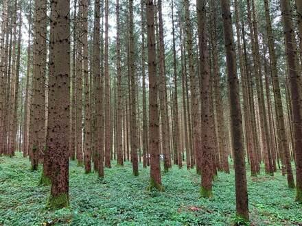 Gepflegtes Waldgrundstück bei Herlazhofen, Nähe Leutkirch im Allgäu