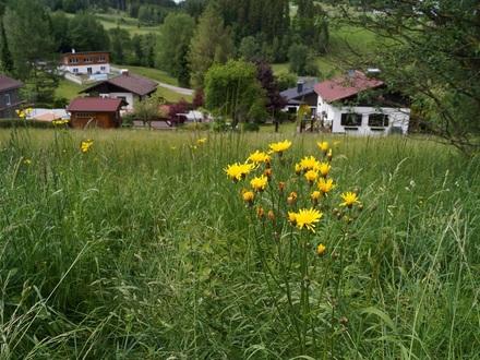 Zwettl/Rodl: 3 Sonnige Bauparzelle/n in idyllischer Siedlungslage!