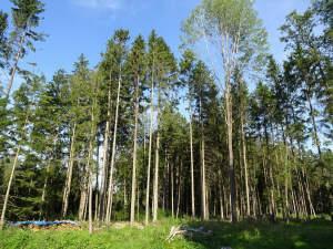 Gepflegte Waldflächen mit guter Zufahrt, auf Wunsch mit Maschinenhalle