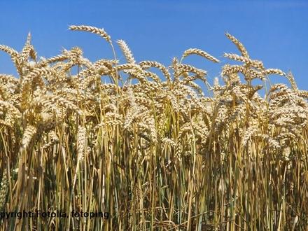 Landwirtschaftliche Nutzflächen in Hilter!