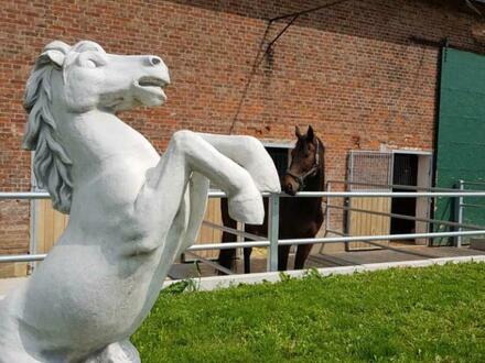 Reiterhof mit Reitplatz, Pferdeboxen, Häusern, Baugrundstück uvm!