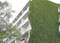 Tipps zur Begrünung von Fassaden und Dächern