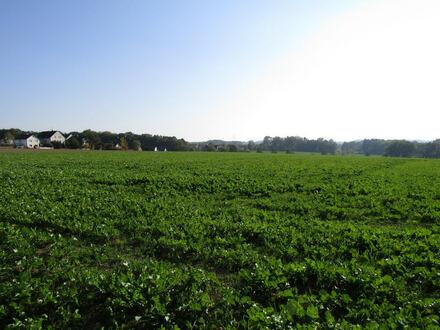 Spenge - landwirtschaftliche Fläche