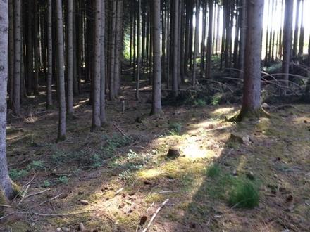Waldgrund 26542 m² Fichte+Mischw. nähe Gersthofen. Gute Lage +Zufahrt,...