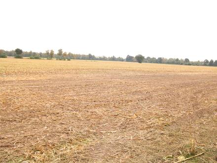 Ca. 4 ha landwirtschaftliche Fläche (Ackerland) in Altenoythe