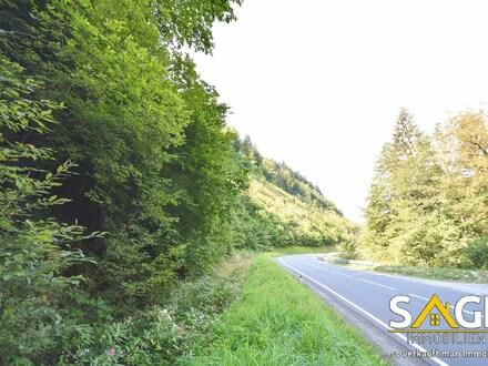 Waldgrundstück in Pöham zu verkaufen!