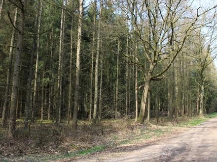 Waldfläche in Lathen (Ems) zu verkaufen!