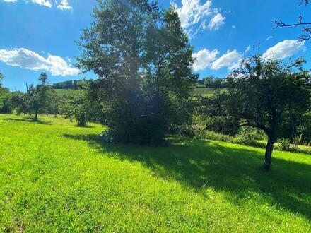 Baumgrundstück in Weinsberg