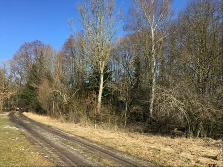 Wald-/Freizeitgrundstück bei Schwindegg