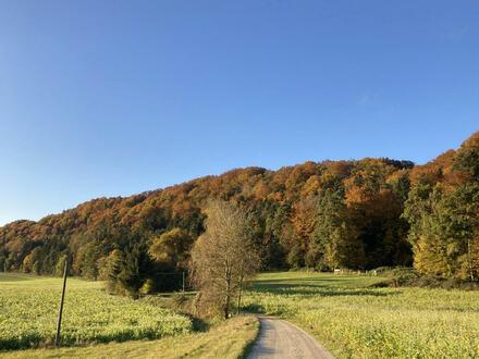 . . zwei Mischwald-Hanggrundstücke, mit teilweise alten Baumbestand, kleiner Wiesenanteil im unteren Bereich
