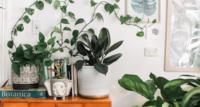 Tipps zum Vermehren von Pflanzenablegern