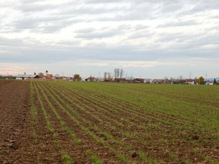 Acker bei Wallersdorf südlich von Kleinweichs