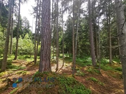Eine sichere und bodenständige Anlage- Waldgrundstück in Reischenhart zu verkaufen!