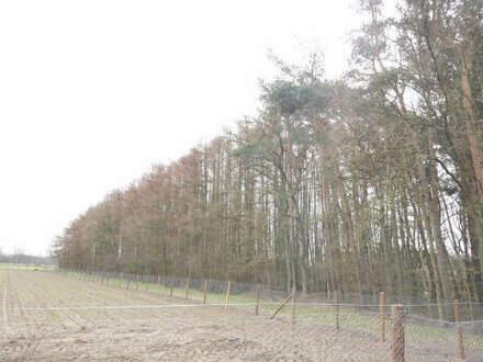 Gut erreichbare Waldfläche mit 50-60 Jahre altem Baumbestand in Herbrum gegen Höchstgebot zu verkaufen.
