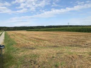 Landwirtschaftliche Fläche / Acker in Balzhausen bei Günzburg