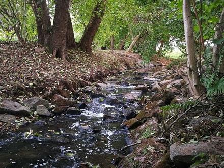 DREGER: Traumwohnung am Rande des Wasser- und Naturschutzgebietes