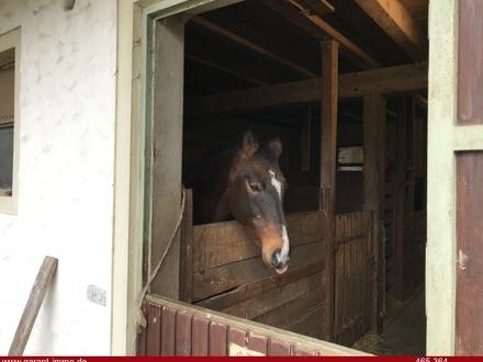 Ein Traum für Pferdebesitzer !!!!