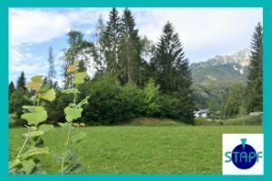 Stapf Immobilien - Günstiges Baugrundstück in Grenznähe Füssen !