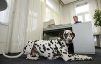 So klappt's mit dem Bürohund