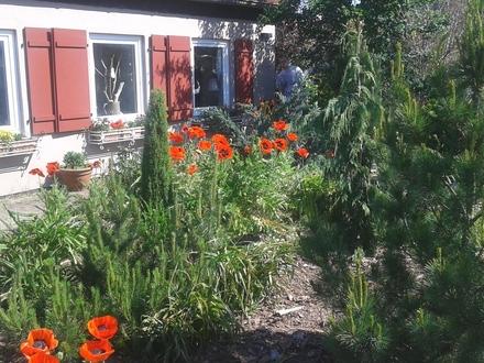 Haus in Eberswalde mit Garten