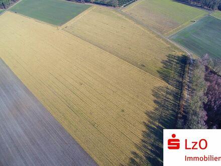 Gutes Ackerland in Visbek zu verkaufen