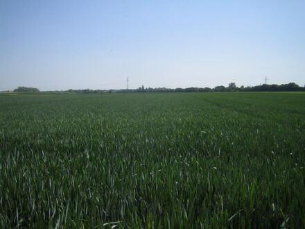 Ackerfläche bei Lauingen