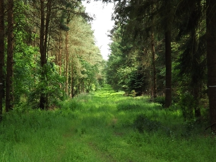 1,92 ha Forstflächen in der Gemarkung Wildeshausen