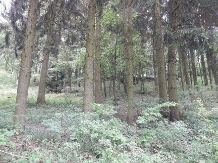 Waldfläche bei Hammerharlesberg