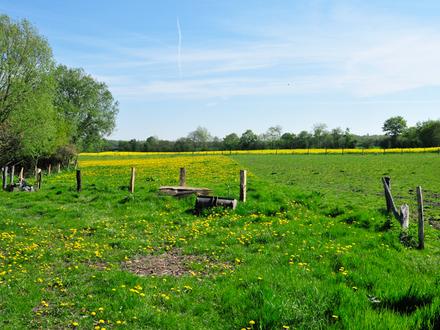 ca. 7,00 ha Weideland in Hollwegerfeld zu verkaufen