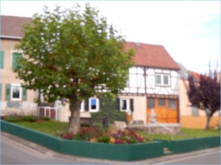 Ober-Olmer Altstadthaus auf 388 m² Grundstück in Südlage mit bestem Ausnutzungspotenzial