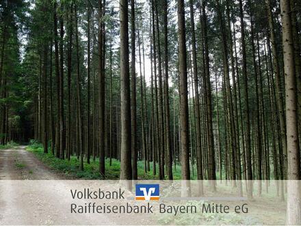 Waldfläche in Schernfeld / Schönfeld