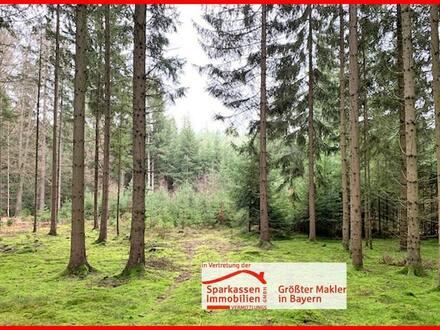 Wald mit gutem Bestand bei Neukirchen b. Sulzbach-Rosenberg