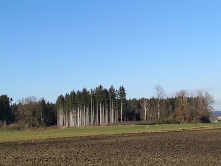 Für Land- und Forstwirte oder Naturliebhaber! Waldfläche - Gemeinde Tuntenhausen