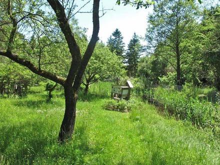ehemaliger Bienenlehrstand & Waldgrundstück