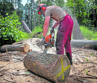 Beim Holz schlagen Schutzkleidung tragen