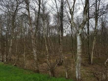 Wald/Forstgrundstück nahe Diepenau