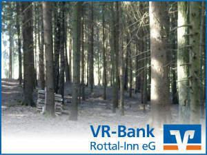 Gepflegte Waldfläche