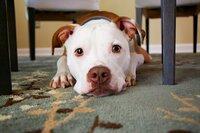 Bello, Mieze und Co. – Haustiere in der Wohnung