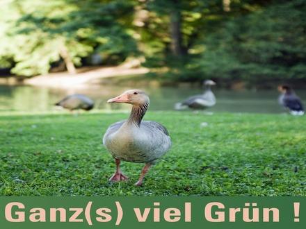 Günstiges Wiesengrundstück bei Hüffelsheim zu veräußern