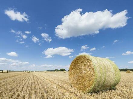 Gegen Gebot: Landwirtschaftsfläche (15.577 m²) in Benstrup