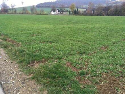 Landwirtschaftliche Fläche in Hohenhausen