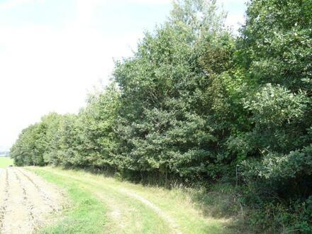 Die Zufahrt zum Waldgrundstück ist von Norden über eine Gemeindestraße...