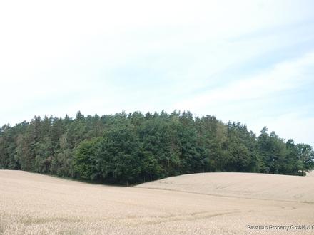 Waldgrundstück in Langenhettenbach bei Ergoldsbach