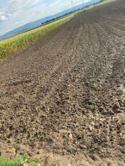 Verschiedene landwirtschaftliche Flächen nähe Stockerau