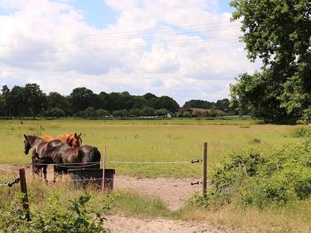 ca. 4,4 ha Grünlandflächen (auch Teilflächen) in Bad Zwischenahn-Rostrup
