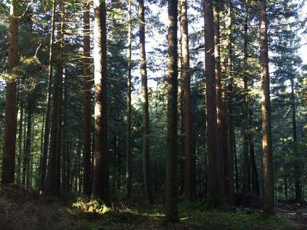 Waldgrundstück, Wald, Mischwald