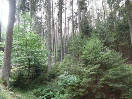 2 Waldgrundstücke in Luhe-Wildenau