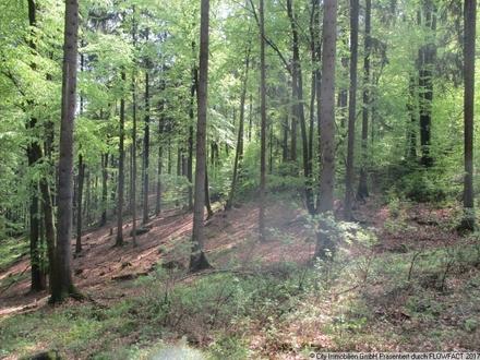 Großzügiges Waldgrundstück mit gemischtem Baumbestand!