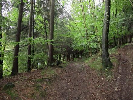 schöne Waldfläche Forstwirtschaftsfläche, leichte Hanglage mit unterschiedlichen Baumbestand
